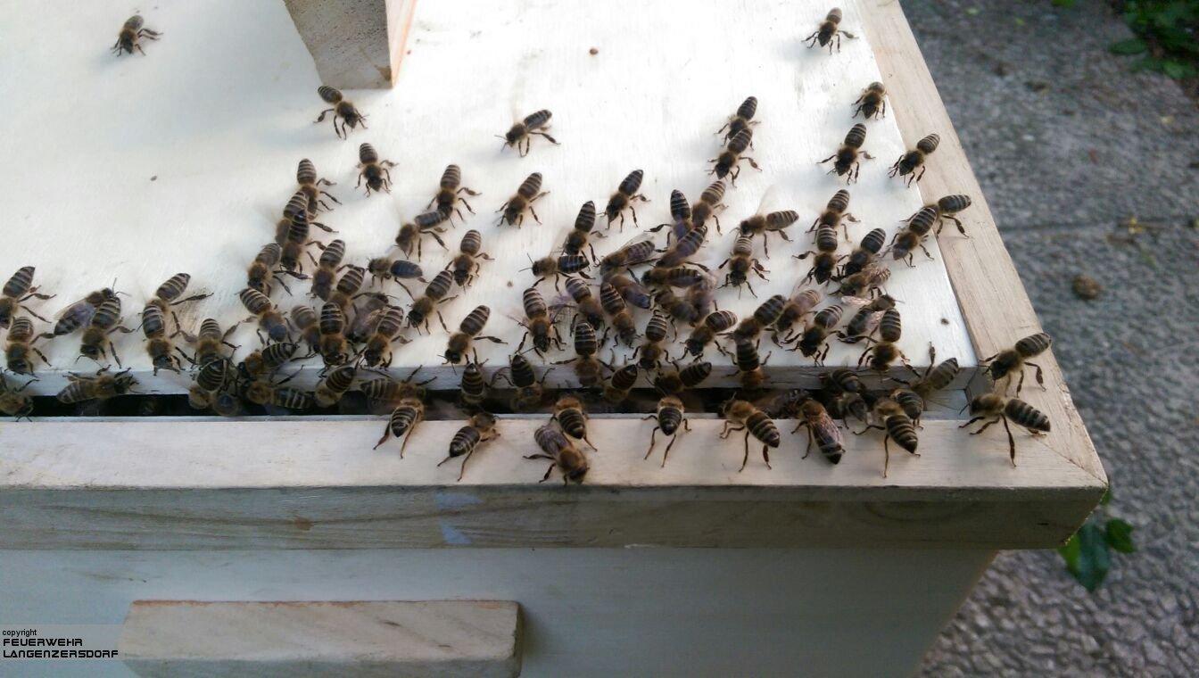 Einsatzfoto Bienenschwarm - Unterstützung Imker