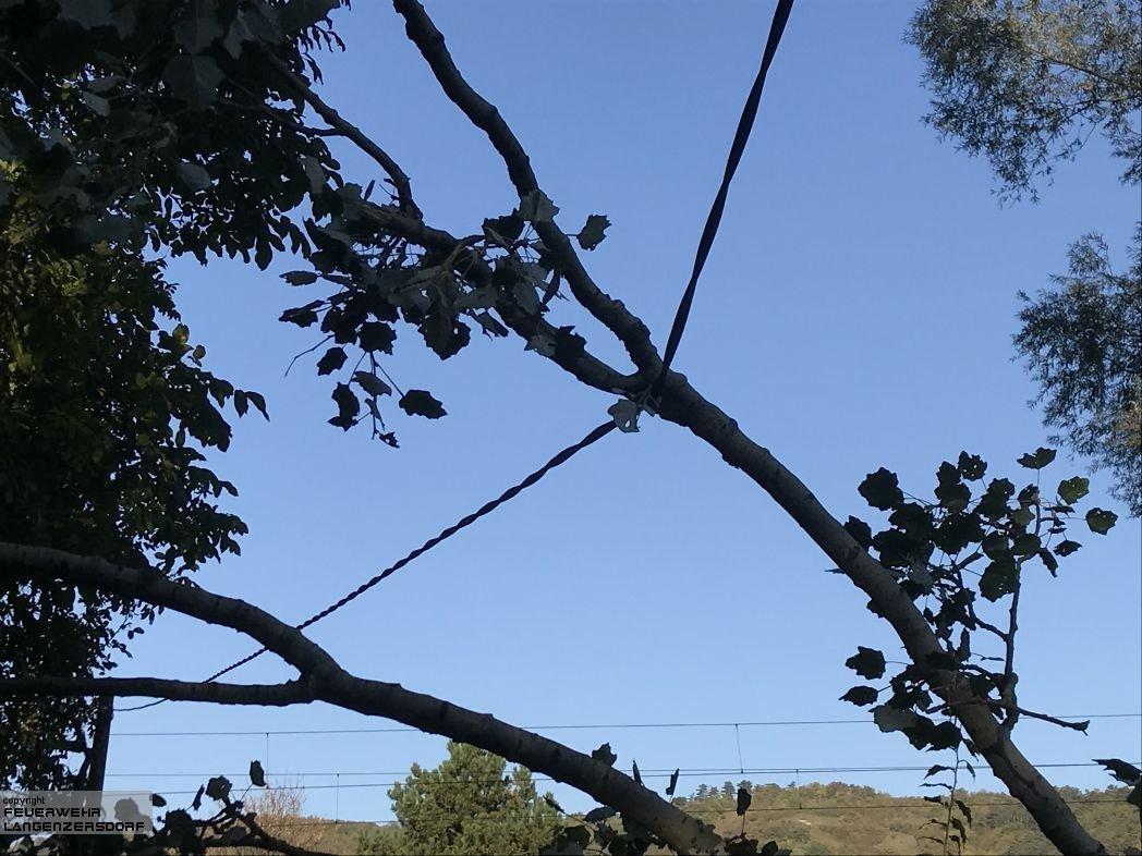 Einsatzfoto Baum auf Stromleitung