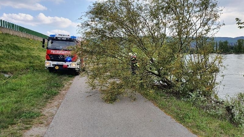 Einsatzfoto Baum über Radweg